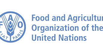 Nigeria May Face Food Crises- FAO