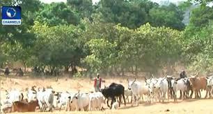 Fulani Herdsmen Kills 20 In A Fresh Attack In Adamawa