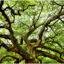 Nigerian Students Hit By Falling Tree In Cameroon Dies