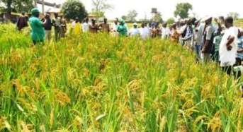 Nigeria's Wheat Plan Falters With Imports Set to Surge