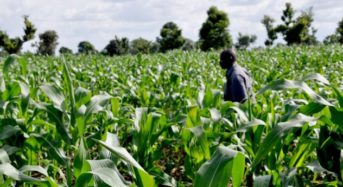 NIRSAL partners NAIC to accelerate growth in agric insurance