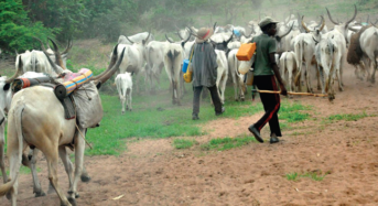 25 Herdsmen Detained By Local Vigilantes Regain Freedom