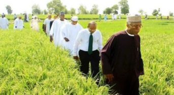 Kebbi State Begins Rice Export To West-North African Countries