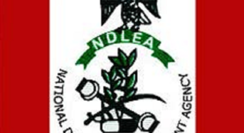 NDLEA Confiscates Large Drug Container In Lagos