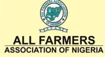 Lagos Farmers Acquires 200 Hecters Of Land To Boost Rice Production