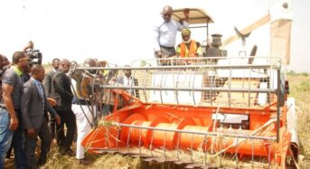 Edo Rice Farmers Happy With Improved Production
