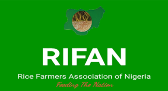 Farmers can grow rice all year round in Lagos, says RIFAN Dep. President