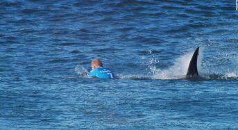 Missing Australia man, victim of shark attack – Police