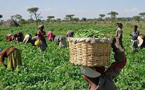 Anchors Borrowers Programme Credit Facility: Farmers Call for Loan Repayment Extension